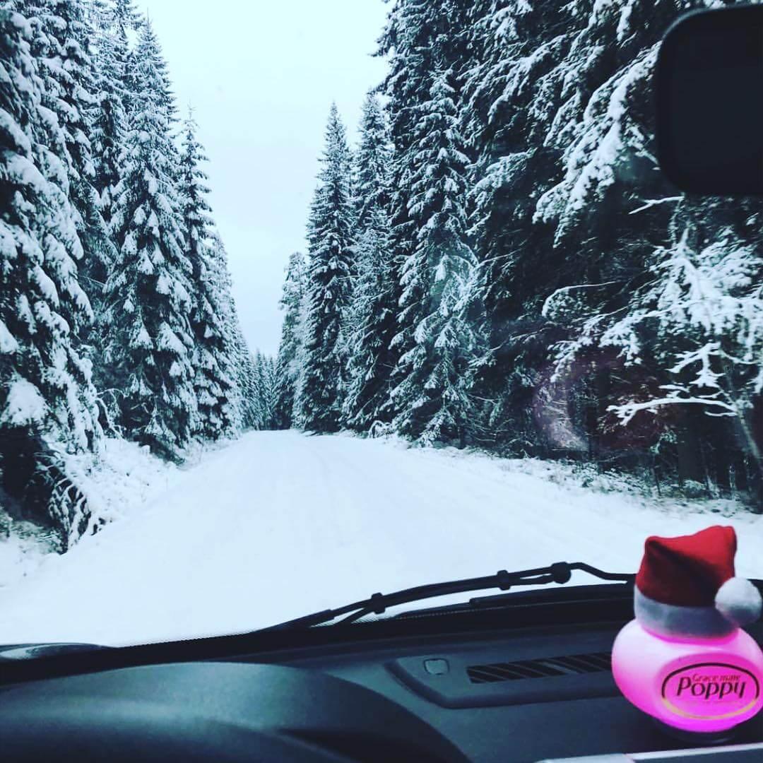 Poppy with snowy road